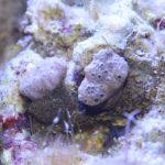 Korallen?